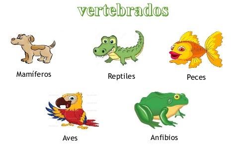Docenteca Vertebrados E Invertebrados Actividades Primaria