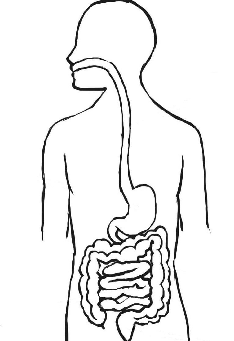 Docenteca El Sistema Digestivo Actividades Primaria