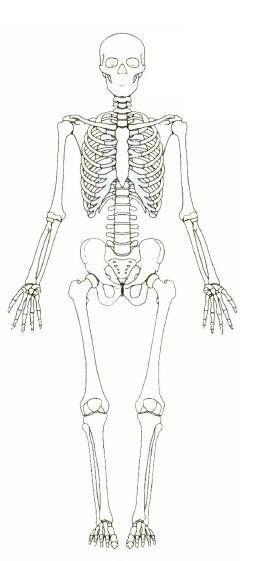 DOCENTECA - El sistema óseo - Actividades